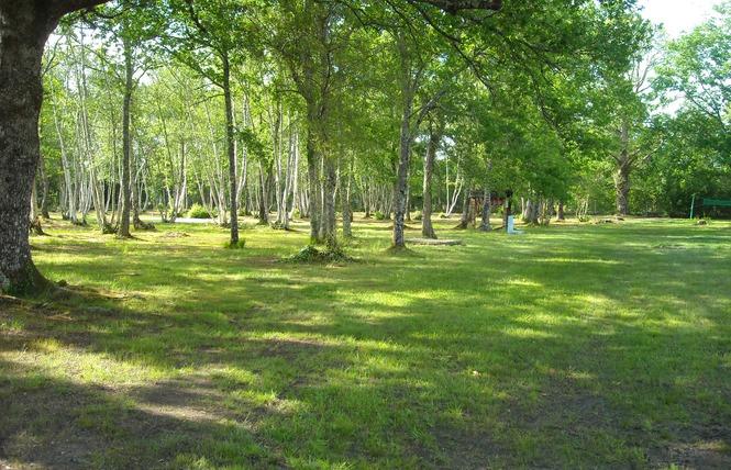 Camping Les Fougeres Lacanau 4 - Lacanau